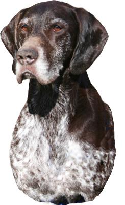 Fenrik-Oddjob-trimmed-head