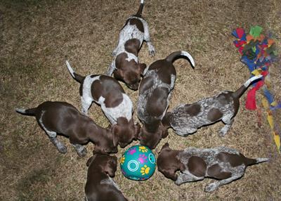 Hi-pups-15