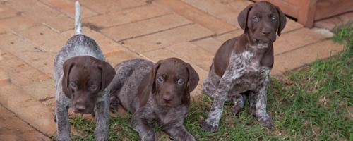 Hot-pups_8655