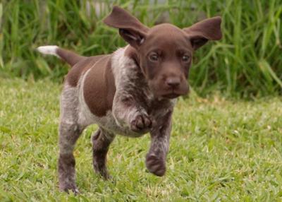 quik-pup7087