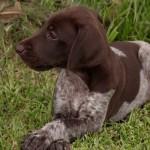 quik-pup7101square