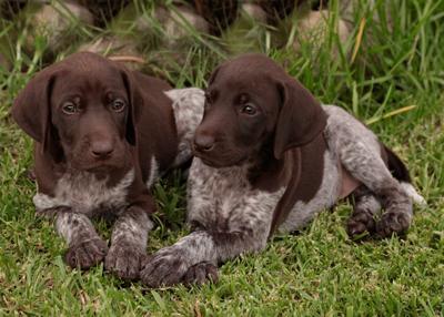 quik-pups7102