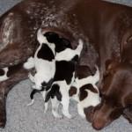 quips-pups0100