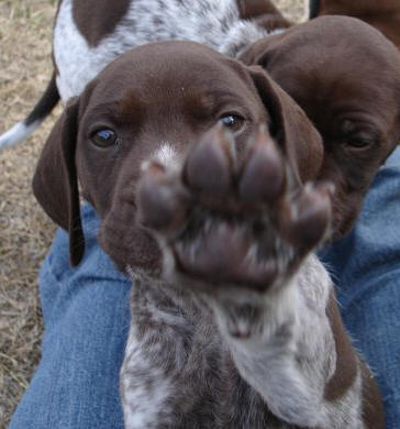 litter hi five